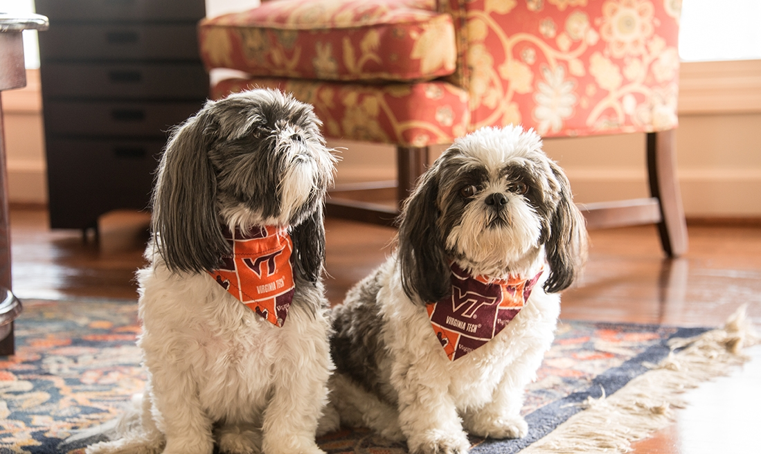 Virginia Tech's biggest fans